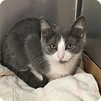 Adopt A Pet :: Rissa - East Brunswick, NJ