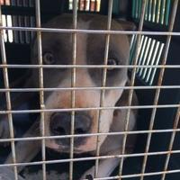 Adopt A Pet :: CLOUD - St. Thomas, VI