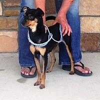 Adopt A Pet :: Clowey - Artesia, NM