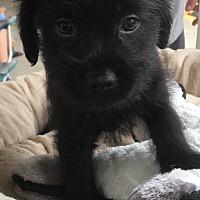Adopt A Pet :: Ricky - Monticello, GA
