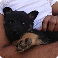 Adopt A Pet :: Zeus - Inglewood, CA