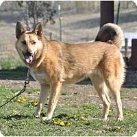 Adopt A Pet :: Gypsy - Hamilton, MT