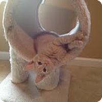 Adopt A Pet :: Scout - Monroe, NC