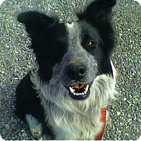 Adopt A Pet :: Lucky - Salt Lake City, UT