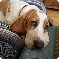 Adopt A Pet :: Finn - Canoga Park, CA