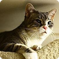 Adopt A Pet :: Ranier - Lombard, IL