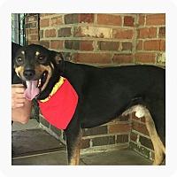 Adopt A Pet :: Rico - Bristol, TN