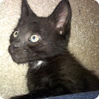 Adopt A Pet :: Watts - North Highlands, CA