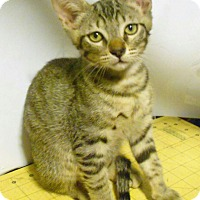 Adopt A Pet :: Autumn - Studio City, CA