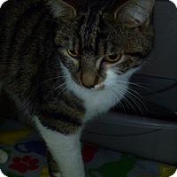 Adopt A Pet :: Leia - Hamburg, NY