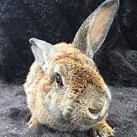 Adopt A Pet :: Leonora - Watauga, TX