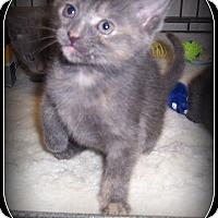 Adopt A Pet :: Kiwi - South Plainfield, NJ