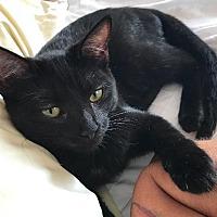 Adopt A Pet :: Bumble - Oxnard, CA