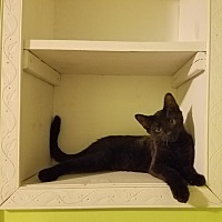 Adopt A Pet :: Licorice - Jeannette, PA