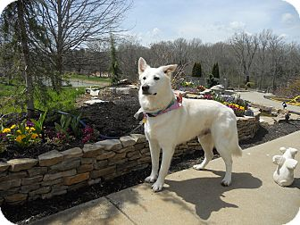 German Shepherd Dog Mix Dog for adoption in Greeneville, Tennessee - Chance