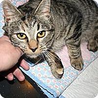 Adopt A Pet :: Gidget - Kalispell, MT