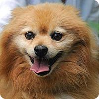 Adopt A Pet :: Dorian - Denver, CO
