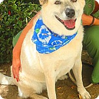 Adopt A Pet :: Lucy - Mission Viejo, CA