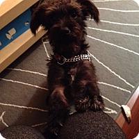 Adopt A Pet :: Roscoe - Vancouver, BC