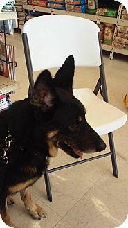 German Shepherd Dog Dog for adoption in SAN ANTONIO, Texas - LUCA