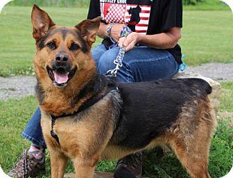 Shepherd (Unknown Type) Mix Dog for adoption in Elyria, Ohio - Sheba