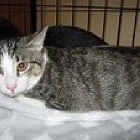 Adopt A Pet :: Snikkers - Arlington, TX