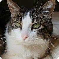 Adopt A Pet :: Sasha and Bayley - Verona, WI