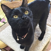 Adopt A Pet :: Precious - Encinitas, CA