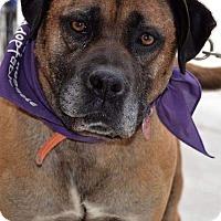 Adopt A Pet :: William - Albemarle, NC