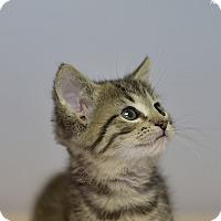 Adopt A Pet :: Angus - Medina, OH