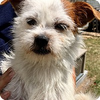 Adopt A Pet :: Brady - West Columbia, SC