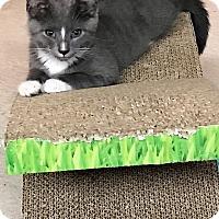 Adopt A Pet :: Odin - Tampa, FL