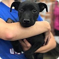 Adopt A Pet :: Ross - Fresno, CA