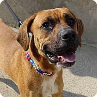 Adopt A Pet :: Joe - Minneapolis, MN