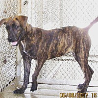 Adopt A Pet :: Brittany - Haines City, FL