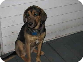 Hound (Unknown Type) Mix Dog for adoption in Smithfield, Virginia - Emmy
