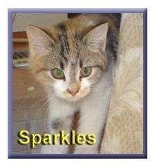Domestic Shorthair Kitten for adoption in Aldie, Virginia - Sparkles