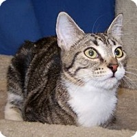 Adopt A Pet :: K-Nelson2-Nelly - Colorado Springs, CO