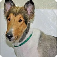 Adopt A Pet :: Bonnie Lynn - Port Washington, NY