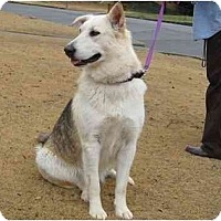 Adopt A Pet :: Charlotte - Conyers, GA