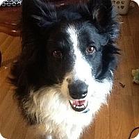 Adopt A Pet :: Trinity - Kingwood, TX