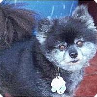 Adopt A Pet :: Buddy - Gum Spring, VA