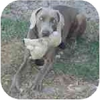 Adopt A Pet :: Shadow  **ADOPTED** - Eustis, FL