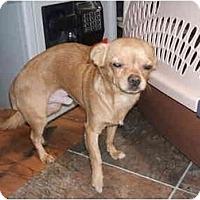 Adopt A Pet :: PEANUT - SCOTTSDALE, AZ