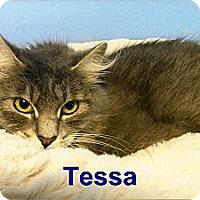 Adopt A Pet :: Tessa - Medway, MA