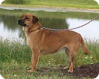 Shepherd (Unknown Type) Mix Dog for adoption in Staunton, Virginia - BJ