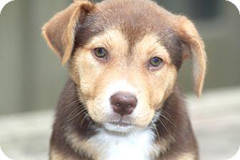 Labrador Retriever Mix Dog for adoption in Norwalk, Connecticut - Lila - adoption pending