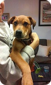 Catahoula Leopard Dog Mix Puppy for adoption in Union Springs, Alabama - Grizzly