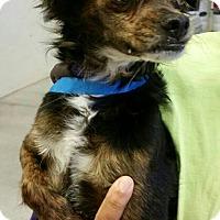 Adopt A Pet :: Tony - Phoenix, AZ