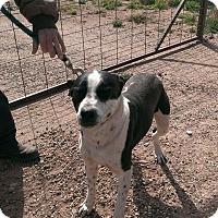 Adopt A Pet :: Skeeter - Childress, TX